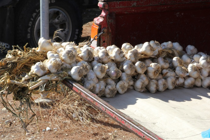 Garlic on sale from back of truck in Skiathos