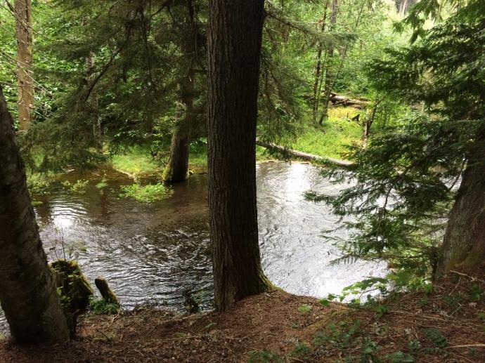 Silver Spring Creek