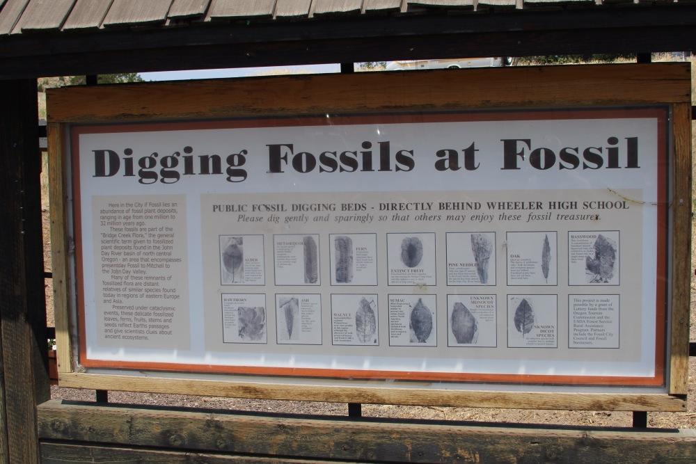 Oregon Trail: Day 2 - Fossils (4/6)