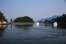 Moorings in Fox Cove
